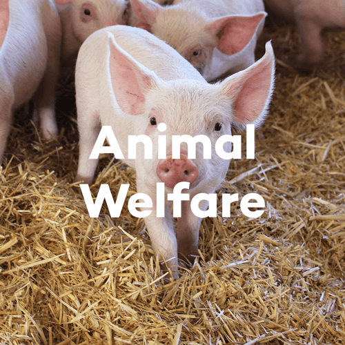 About SunPork - Our Animal Welfare Policies - 100% Australian Pork Supplier
